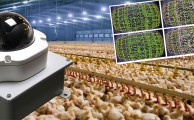 Directive 2007/43/EC: potential role of automated chicken monitoring