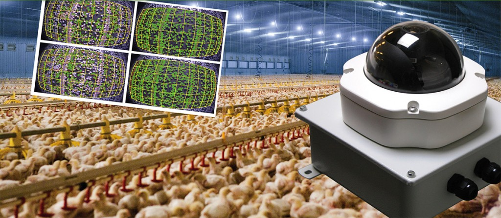 monitoring poultry
