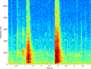 Spectrogram of two calf coughs.
